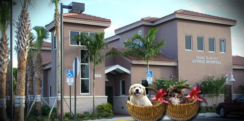 Summit Boulevard Animal Hospital - Veterinarians serving West Pam Beach, Palm Beach, Wellington and more. Welcome to our site!